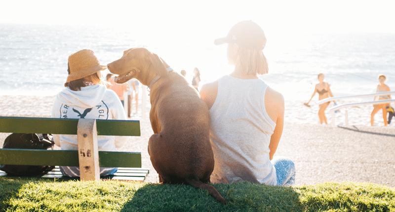 listado de playas con perros