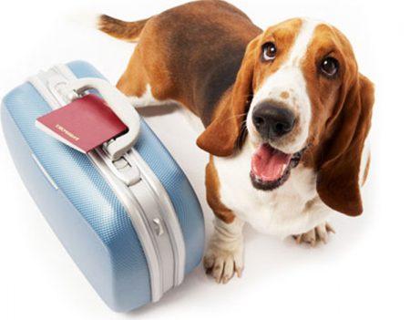 vacaciones con mascotas