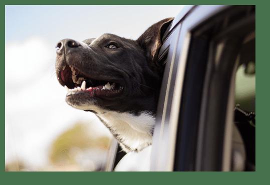 perro en ventana de coche_