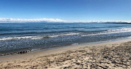 Playas caninas Valencia