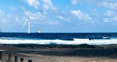 Playas para perros Canarias